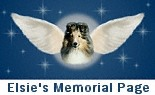 A Special Tribute to our special little girl, Elsie
